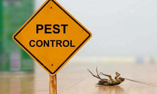 Guidelines that should be followed to get rid of pests